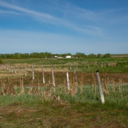 fence lining green fields of cobblestone creek, airdrie