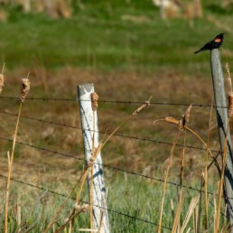 bird sitting on fence post in cobblestone creek, airdrie
