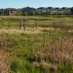houses lining the horizon in the distance in cobblestone creek, airdrie