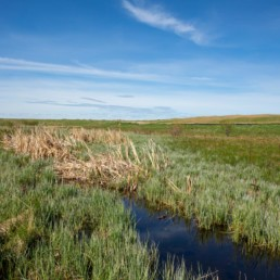 close up of small creek overlooking field in cobblestone creek, airdrie